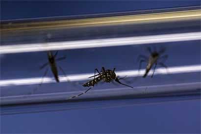 División de Alphabet crea mosquito de laboratorio contra el Zika