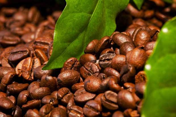 Política de no producir café robusta en el país se mantendrá