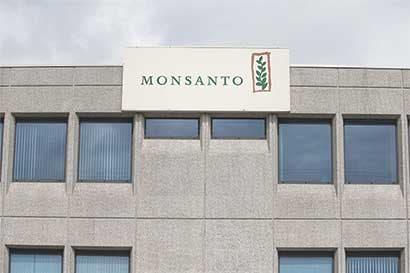 Rivales menores de Monsanto ven gran oportunidad en fusiones