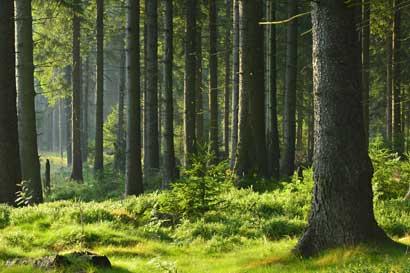 Gobierno de Estados Unidos dona equipos de comunicación a Parque Nacional Corcovado