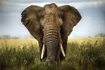 Dos tercios de los animales se extinguirían en 2020, según WWF