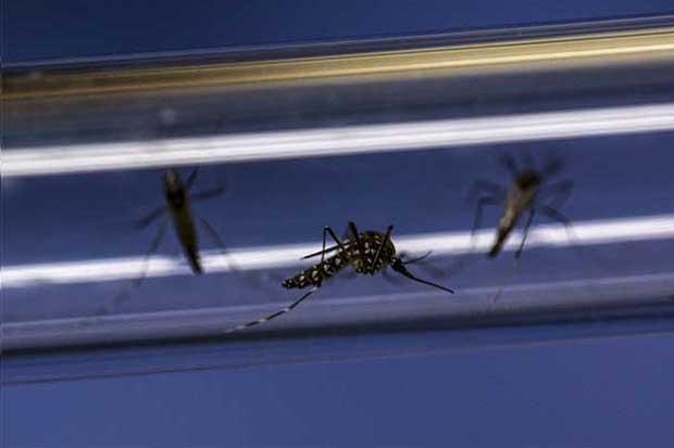 Costa Rica participará en jornada centroamericana contra el Aedes Aegypti