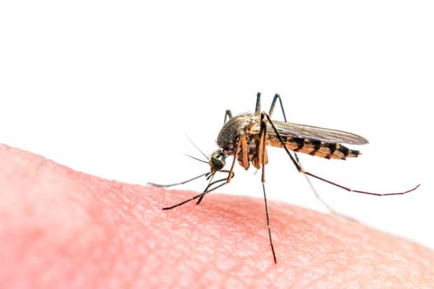 Unas 121 embarazadas tienen zika