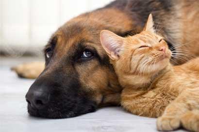 """""""Plan B"""" para ley de bienestar animal cerca de discutirse en el Plenario"""