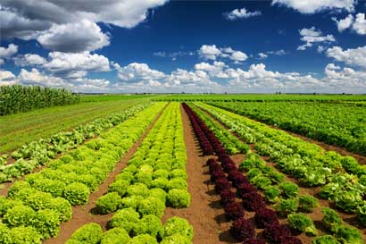 Mayoristas agroalimentarios tendrán su primer congreso