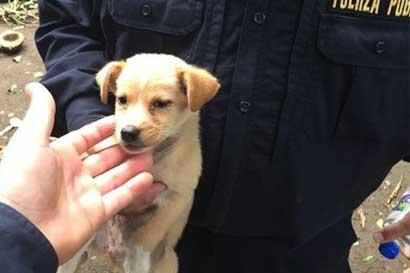 Hospital veterinario de UNA estará abierto para emergencias de Otto