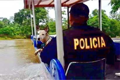 Senasa ha atendido 150 mascotas en emergencia tras huracán