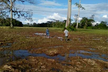 1.100 hectáreas de arroz dañadas por Otto