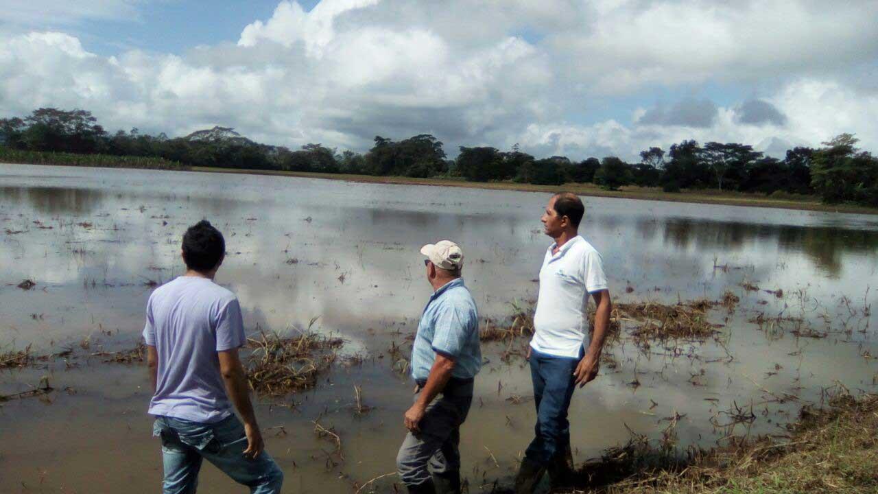 Aumenta número de hectáreas afectadas por Otto