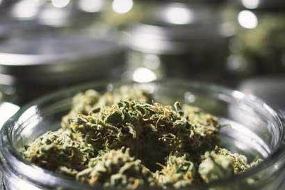¿Quiere investigar el cannabis medicinal? Vaya a Israel