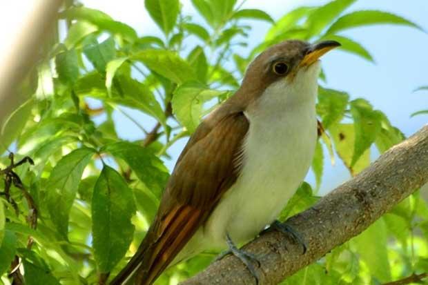 La Sabana cuenta con 11 nuevas especies de aves