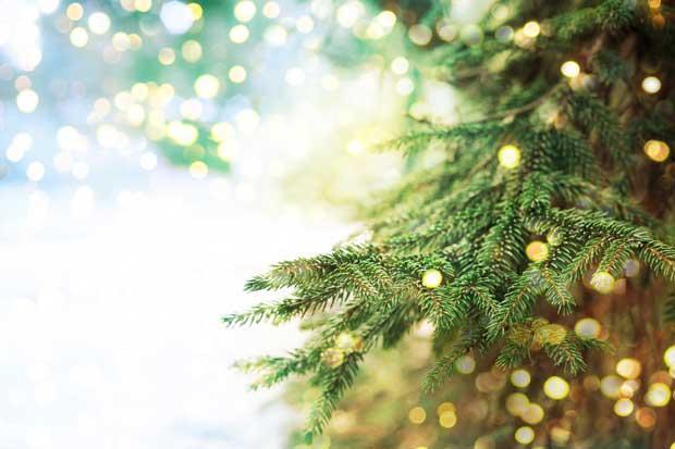Municipalidad de San José recolectará árboles de Navidad