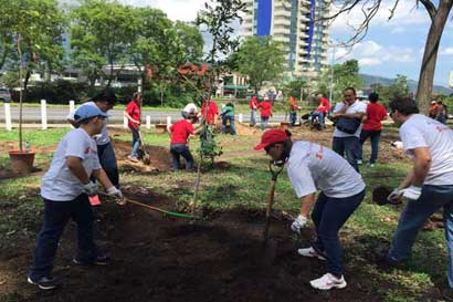 Rearborización de la Sabana avanza y logra colocar 3.600 nuevos árboles