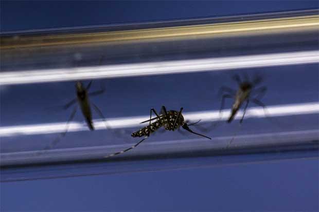 Nicaragua fue el país centroamericano con más casos de zika en 2016