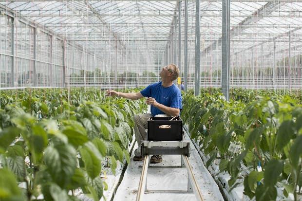 Tecnología israelí ayuda a Monsanto a alimentar al mundo