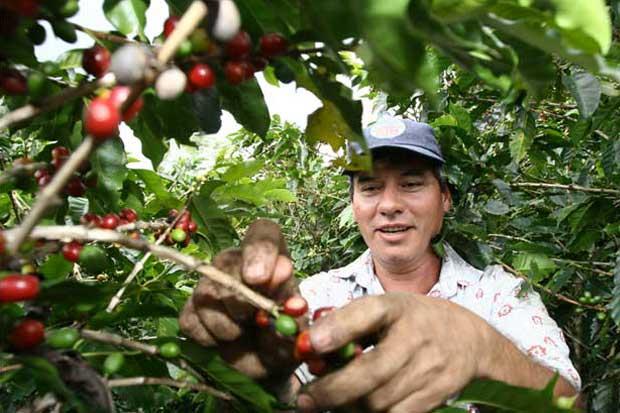 Caficultores tendrán nuevo seguro de cosechas