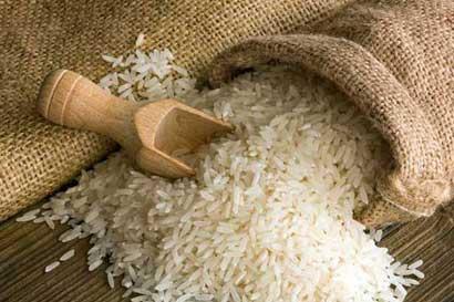 Arroceros se capacitan en modelo de grano sostenible
