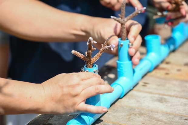 ICE continúa instalación de arrecifes artificiales en Guanacaste