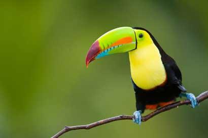 Costa Rica recibió premio como mejor destino de aventura