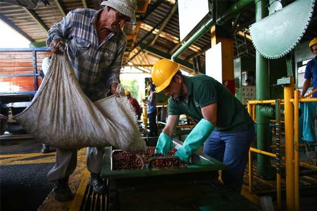 Starbucks comercializará café cultivado en su propia finca del país