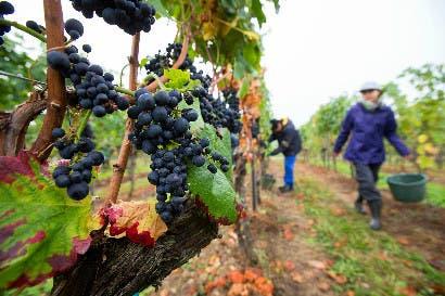 Suelo, no uvas: lo último que hay que saber para escoger vino
