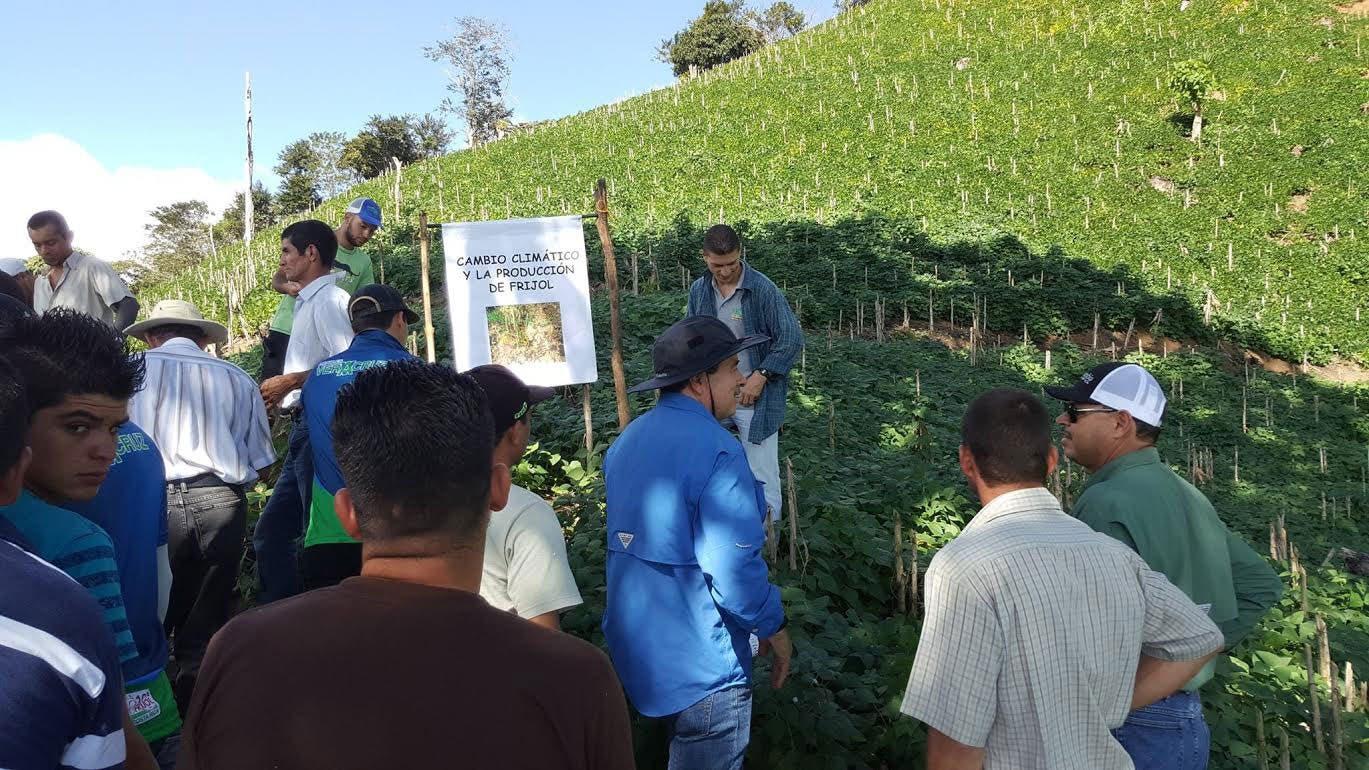 Nueva variedad de frijol ayudará a paliar sequía