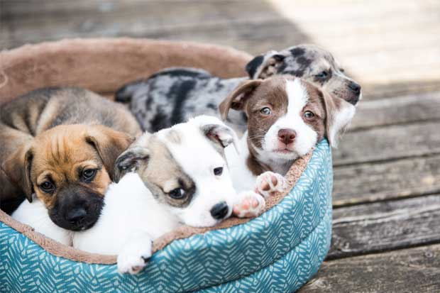Centro Comercial Expreso organiza feria de adopción de cachorros