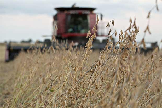 Mano dura de Trump contra inmigrantes preocupa a agricultores