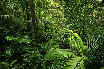 279 mil hectáreas de bosques han recibido remuneración por servicios ambientales