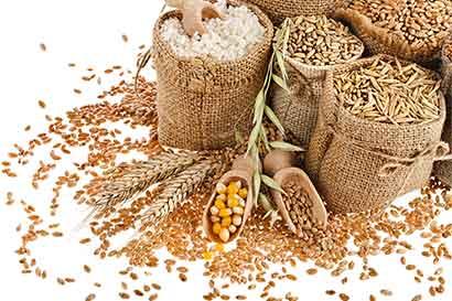 Empresas mexicanas planean eludir importación de granos de EE.UU.