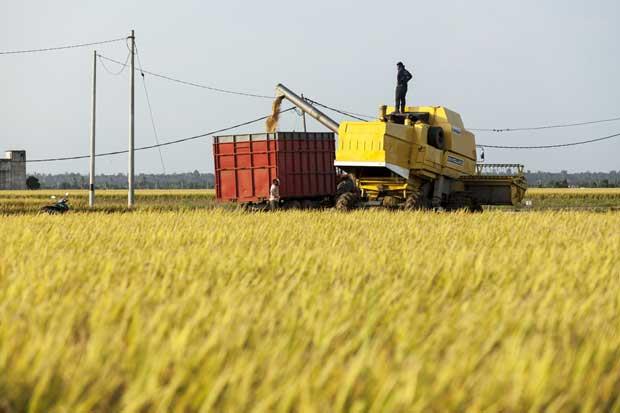 México compra arroz argentino en medio de tensiones con Estados Unidos