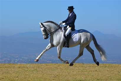 Feria centroamericana de caballos españoles se realiza por segunda vez en el país