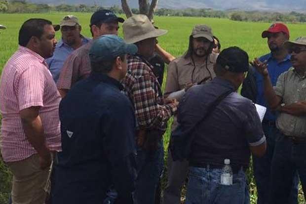 Arroceros ticos conocen sobre sistemas de riego y secano en Nicaragua