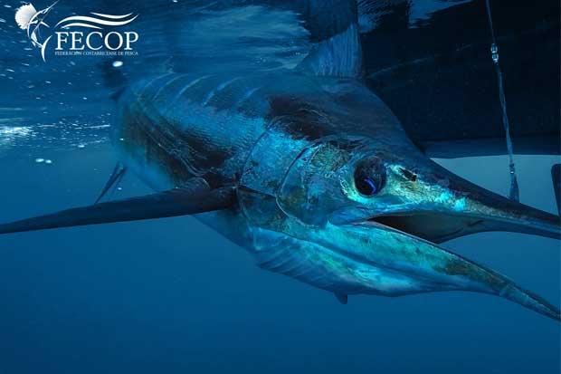 Fecop celebra enmienda a ley de pesca en Estados Unidos