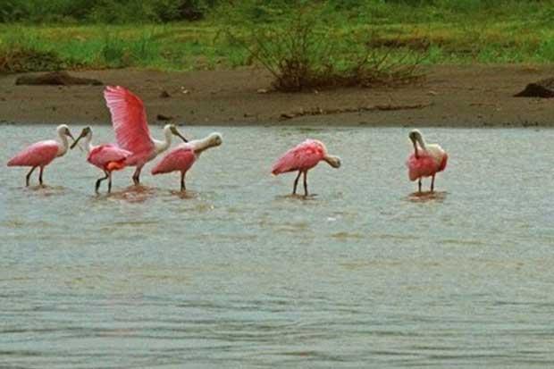 Parque Nacional Palo Verde recupera 300 hectáreas de humedal