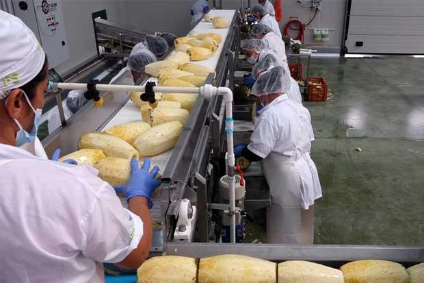 Empresa de Siquirres exportará piña deshidratada a Italia e Israel