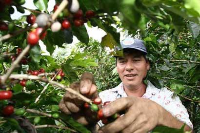 Concurso internacional premiará mejor café tostado en origen