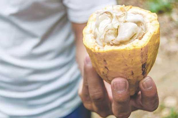 Congreso reúne productores limonenses de cacao