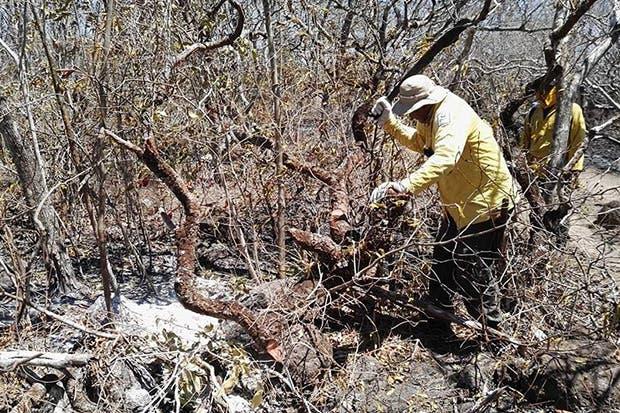 SINAC atendió 25 incendios forestales durante primeros tres meses de 2017