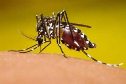 Farmacéuticos realizarán campaña sobre dengue, chikunguña y zika