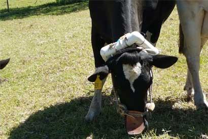 UTN realiza estudio sobre impacto de gases de efecto invernadero proveniente del ganado