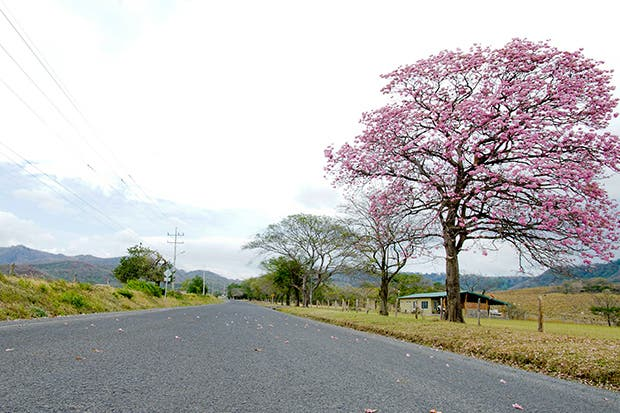 Convenio público privado asfaltó carretera en Guanacaste