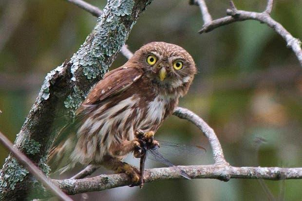 Festival de Aves Urbanas tomará Parque La Libertad