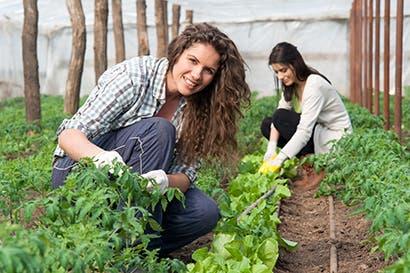 Sector agropecuario es clave en economía nacional según la OCDE