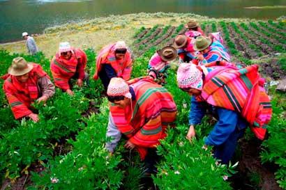 Nueva publicación ofrece conocimiento sobre inclusión en agricultura y territorios rurales