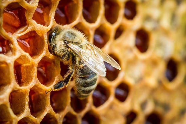 Congreso fortalecerá a sector apícola