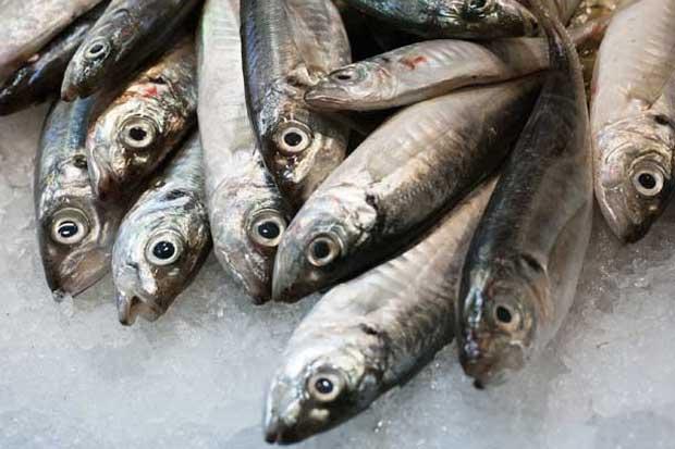 Venta de pescado crecerá un 40% en Semana Santa
