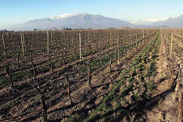 Precios de viña chilena subirán por clima inusual