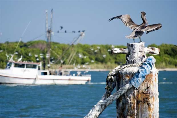 Pescadores se manifestarán en contra de técnica de arrastre