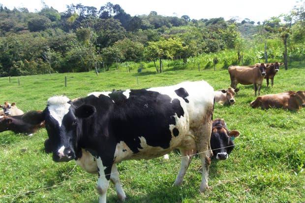 Finca en Coronado reduce costos con producción de biogás